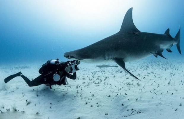 Удивительные фото акулы