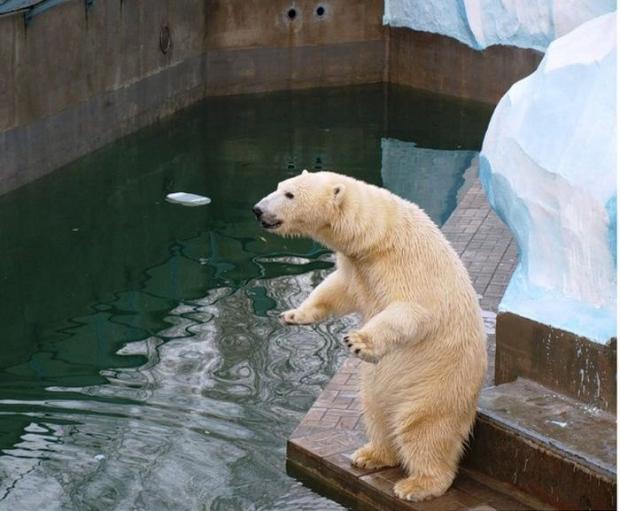 У медведей в семье пополнение